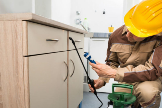Best Pest Control Services In UAE