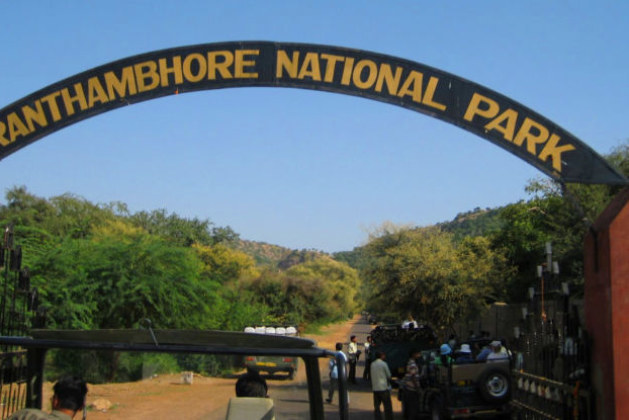 Every Feline Has A Specific Personality in Ranthambore: An Amazing Experience of Jungle Safaris