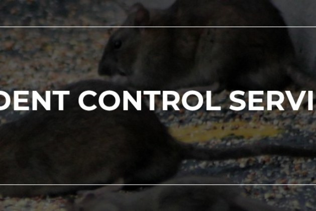 Things To Consider Before Hiring A Commercial Pest Control Service