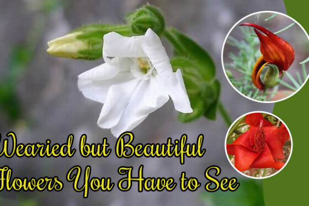 Wearied but Beautiful Flowers You Have to See