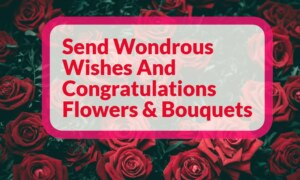 Send Wondrous Wishes And Congratulation Flowers & Bouquets