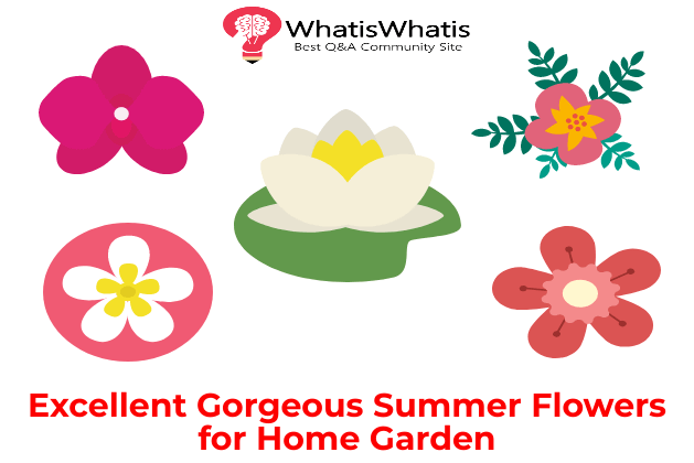 Excellent Gorgeous Summer Flowers for Home Garden