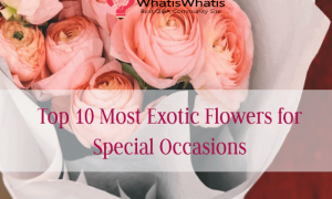Top 10 Most Exotic New year Flowers for Special Occasions