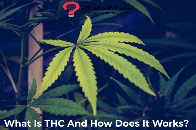 What Is THC And How Does It Works?