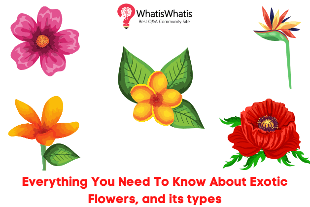 Everything You Need To Know About Exotic Flowers, and its Types
